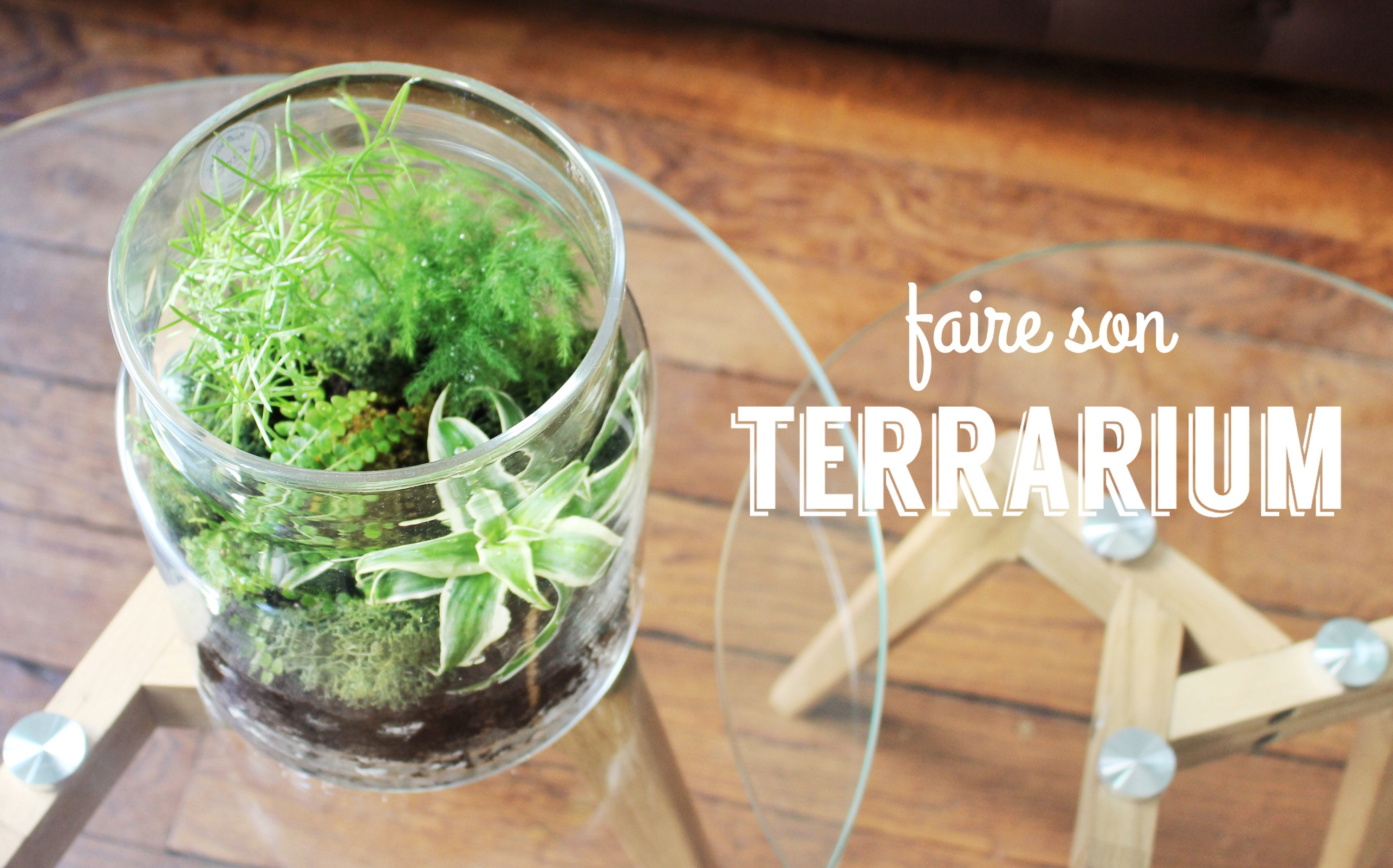 diy faire un terrarium mes derni res lubies. Black Bedroom Furniture Sets. Home Design Ideas