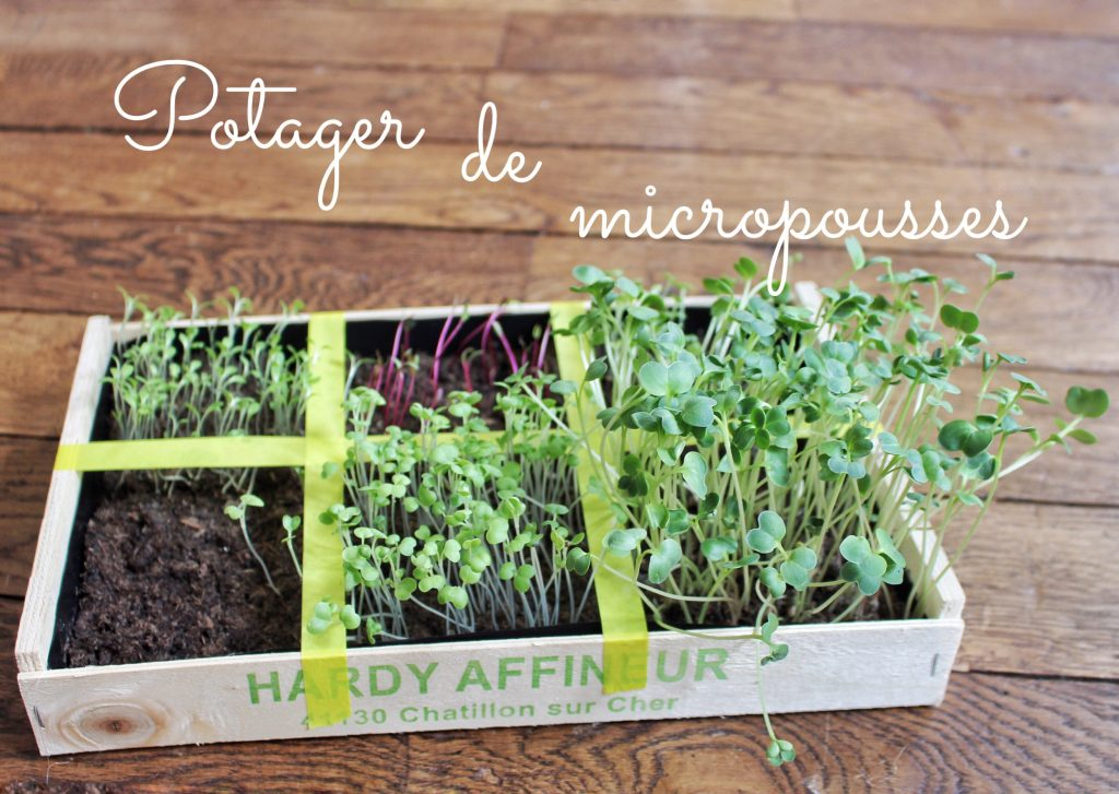 Diy un potager d 39 appartement mes derni res lubies for Jardinage d interieur
